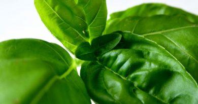Pěstujete bylinky? Poradíme, co mají rády a co ne