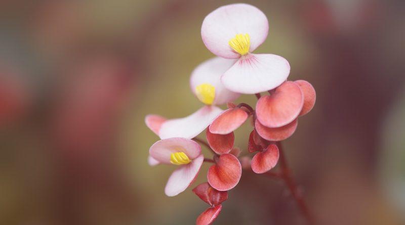 pokojovým rostlinám