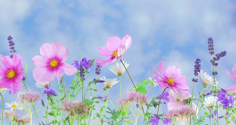 Vládne na zahradě sucho? Vysázejte do záhonů rostliny, které sucho milují