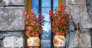 Chcete zpestřit okenní parapet? Víme, jaké rostliny k oknu vybrat